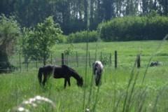 Pferde zu Gast auf unserer Wiese