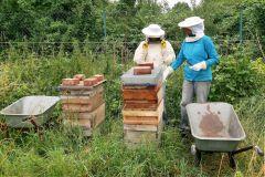 Bienen auf dem Grundstück