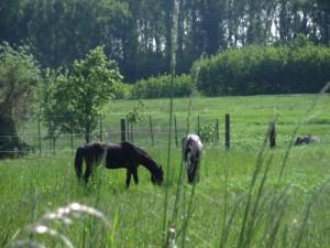 Pferde_288_400x300